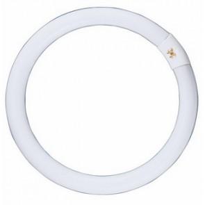 240V T9 32W Circular Fluorescent Bulb 8000 Hours CLA Lighting