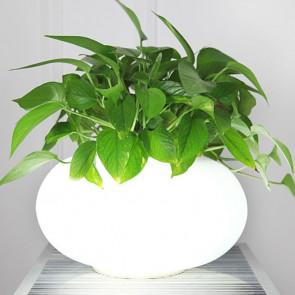 Flowerpot table lamp citilux